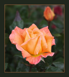 What a lovely thing by LynEve, photography->flowers gallery
