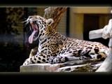 yawn by kodo34, Photography->Animals gallery