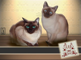 More Kitties Again by Jhihmoac, Photography->Manipulation gallery