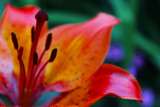 Colorful by tndr, photography->flowers gallery
