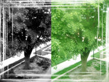 Red Trees Redone (per request) by lokigrl616, Photography->Manipulation gallery
