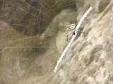the critter that lived outside my bungalo by mizzhoffman, photography->insects/spiders gallery
