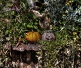 Defries Garden Seasonal Display-Pumpkin Head by tigger3, photography->general gallery