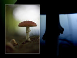 Fall is coming by 40897, Photography->Mushrooms gallery