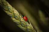 Quit Bugging Me! by zunazet, photography->insects/spiders gallery