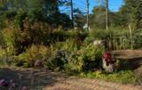 Defries Garden My Wonderland by tigger3, photography->gardens gallery