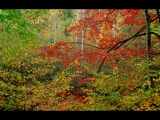 Fall in the Smokies by photoimagery, photography->landscape gallery