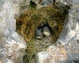 Hungry Birds by brasiu69, photography->birds gallery