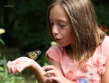 Monarch Release_Precious Moment #2 by tigger3, photography->butterflies gallery