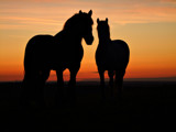 Silhouettes by Dunstickin, photography->animals gallery