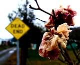 Beauty In Decay - Le commencement de l'extrémité by ponygirlcurtis, Photography->Flowers gallery