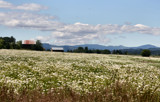 Wildflower Field by verenabloo, Photography->Landscape gallery