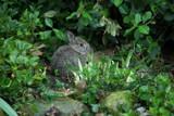 Bunny in hiding by rzettek, Photography->Animals gallery