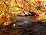 Autumn River! by marilynjane, Photography->Landscape gallery