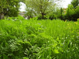 Green Green grass of my home by sunnymay, photography->landscape gallery