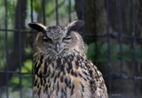 Zoo Visit #1 by tigger3, photography->birds gallery