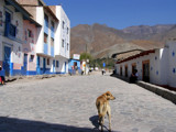 Antioquia Series - 2 - Dog in the Street by jdinvictoria, Photography->Animals gallery