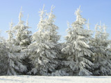 Frozen trees by Clayd, Photography->Landscape gallery