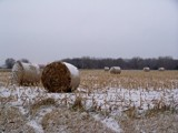 Frosted Mini Wheats? by kidder, Photography->Landscape gallery