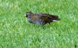 Sleepwalking by 0930_23, photography->birds gallery