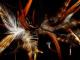 Feather-Fetti by ChobiKaze, Photography->Macro gallery