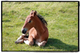 Bodmin Moor Foal by sanjaq, Photography->Animals gallery