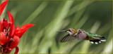 Calendar Hummer #4 by tigger3, photography->birds gallery