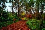 It's a long walk by biffobear, photography->nature gallery