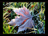 frosty leaf by JQ, Photography->General gallery
