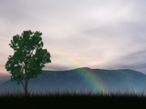Lonely Tree (Clearer Res.) by SamGerdt, Computer->Landscape gallery