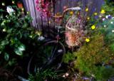 On yer bike.... by biffobear, photography->gardens gallery