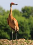 The Surveyor by tigger3, photography->birds gallery