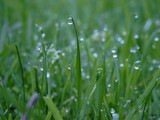 grass drops by cbschoot, photography->macro gallery
