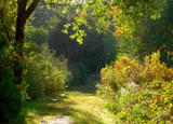 a green path (for PJ) by solita17, Photography->Nature gallery