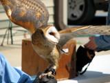 Talons XXIV by Hottrockin, Photography->Birds gallery