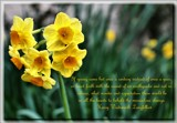 The Beauty of Spring #4 by LynEve, photography->flowers gallery