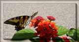Butterflies Are Free #3 by tigger3, photography->butterflies gallery