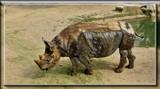 Rhinofractaloceros by Jimbobedsel, photography->manipulation gallery