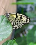 Fragile by jennyvladimirova, Photography->Butterflies gallery