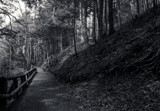 B/W Trail by Eubeen, contests->b/w challenge gallery