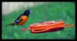 Jelly 'n' Juice by Hottrockin, Photography->Birds gallery