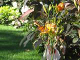 butterfly by graffitigirl21, photography->butterflies gallery