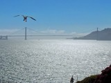 Seagull Above The Golden Gate From Alcatraz by PhotoKandi, Photography->Bridges gallery