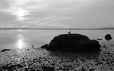 Gull Rock by Tomeast, contests->b/w challenge gallery