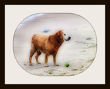 Looking for a Beach Boy ~ for Boris (SAAB) by mesmerized, photography->pets gallery