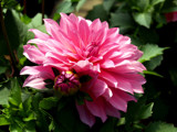 Happy Birthday, Mimi! by marilynjane, Photography->Flowers gallery