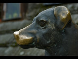 brassy dog by jzaw, Photography->Sculpture gallery