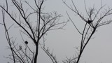 Bird Silhouettes by eppictures, photography->birds gallery