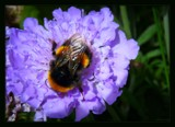 No Buzz by LynEve, photography->flowers gallery