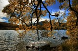 Autumn Willows . . . . by LynEve, photography->landscape gallery